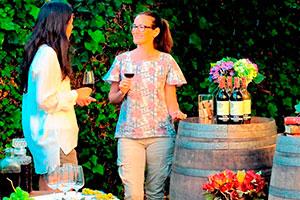 Catas de vino al aire libre - Una velada entre vinos y quesos
